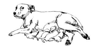 la perra